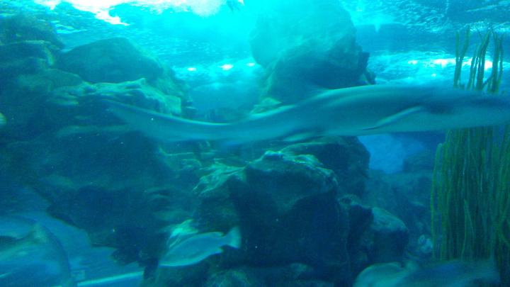 2019穆鲁拉巴攻略海底水族馆游玩自驾,上午参上海到黄山世界三日游攻略图片