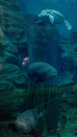 2019穆鲁拉巴海底攻略水族馆游玩攻略,上午参龙港v海底世界图片