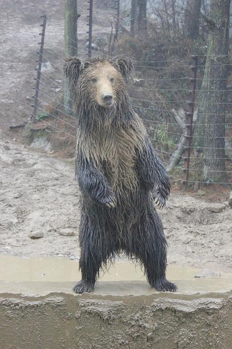 贵阳森林野生动物园图片