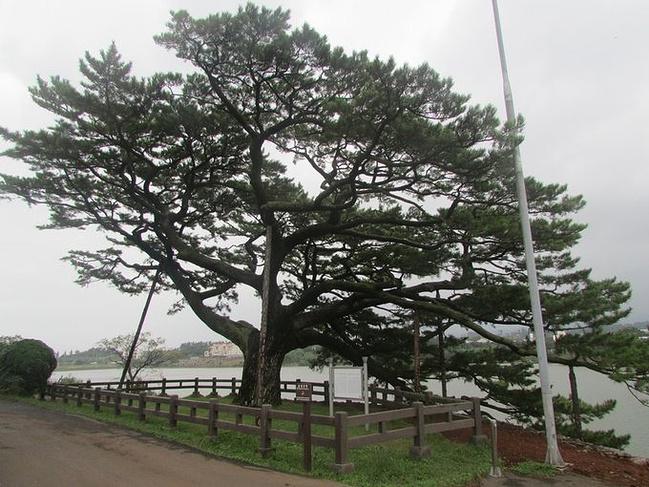墓地旁边种什么树