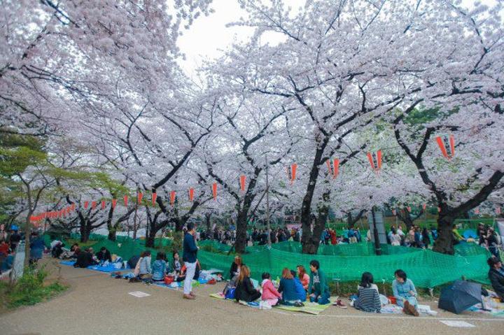 在赏樱的日本人~~大家都是这样席地而坐开上几罐啤酒~~说...