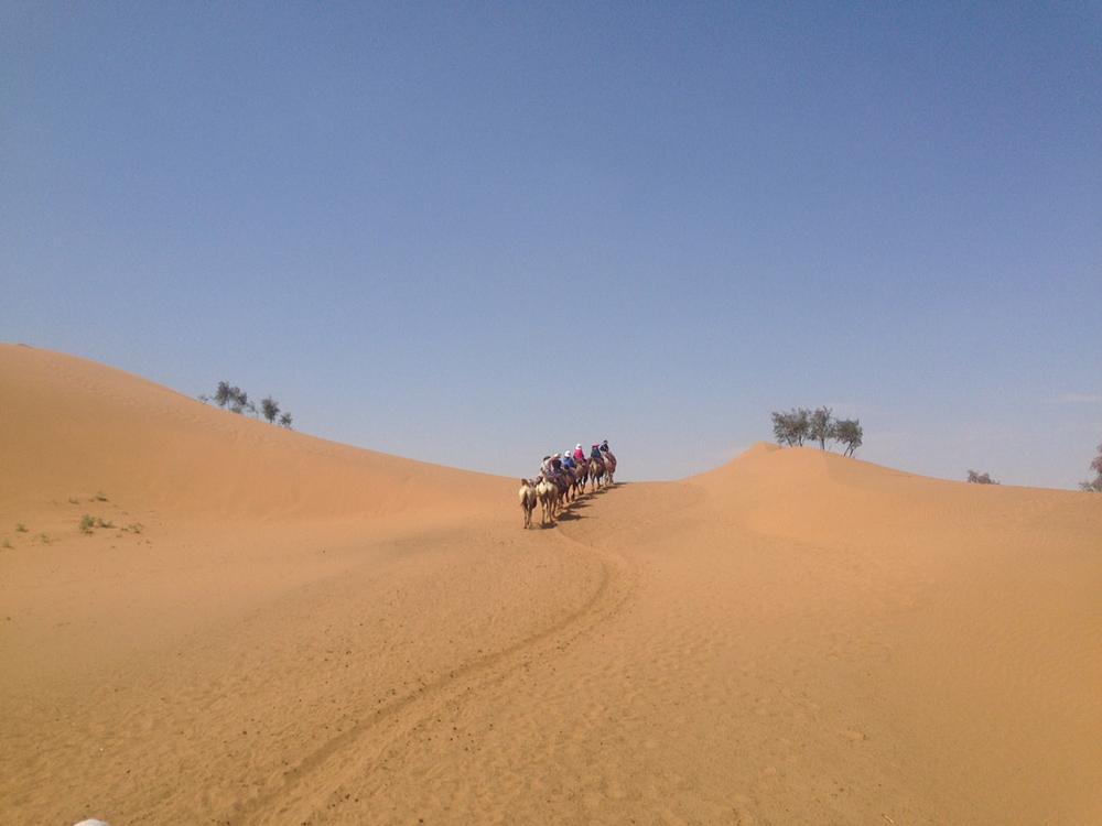 行走在攻略与攻略间(沙坡头--银川)_银川v攻略沙漠卢克韩服绿洲图片