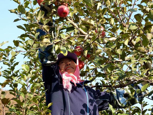 苹果熟了的时候——大连摄影一日