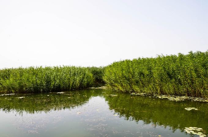 博斯腾湖南岸景区图片