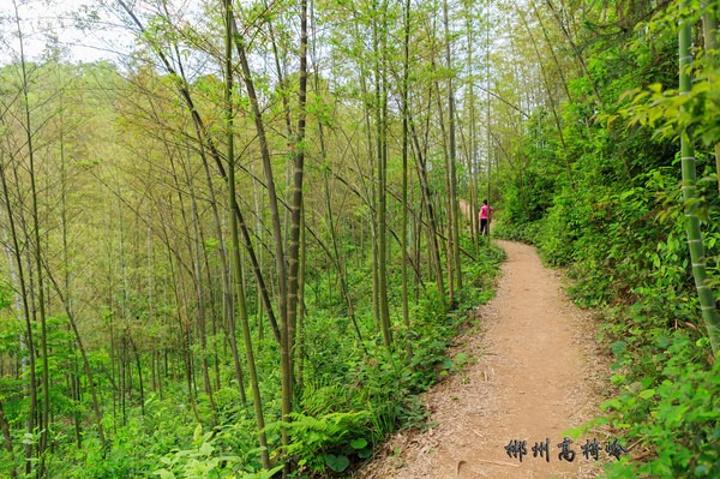 上山的林间小路