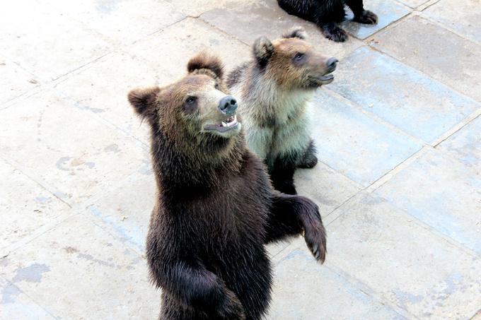 神雕山野生动物自然保护区图片