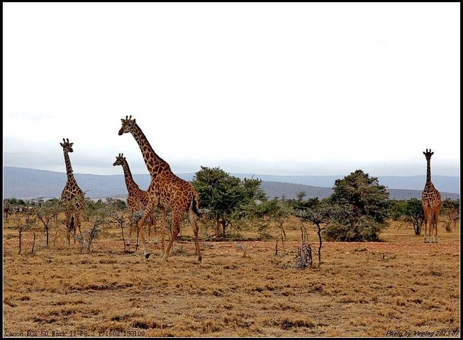 野生动物保护区之一
