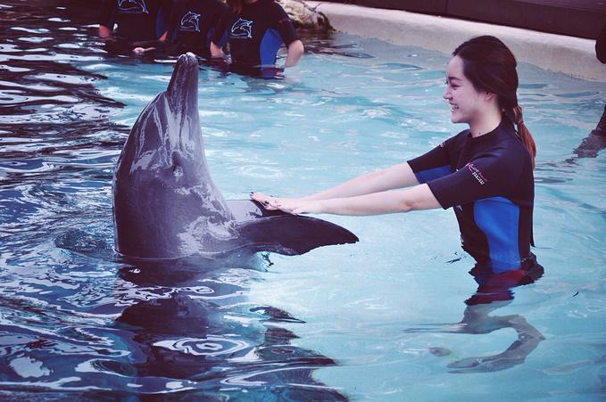 1 海豚weishi跟我们用尾巴打招呼,热情欢迎我们的到来.