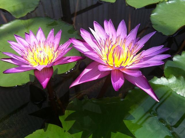 关于描写植物的古诗