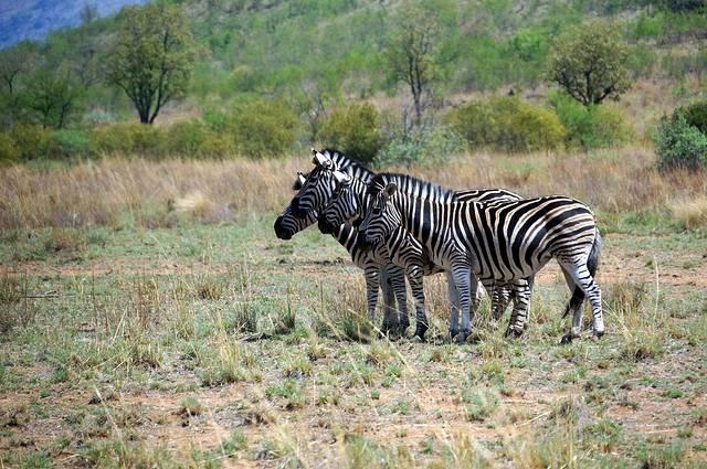 多彩南非 神秘迪拜