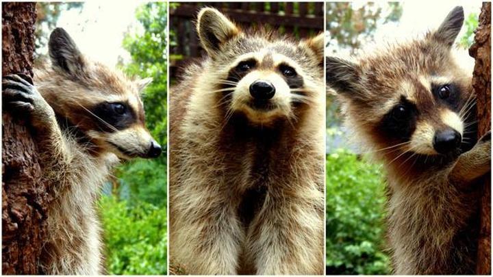 云南野生动物园是云南省唯一的以野生动物驯养繁殖,观赏,展示为主体