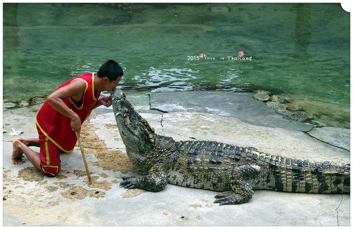 北榄鳄鱼湖动物园是泰国著名游览胜地,离曼.