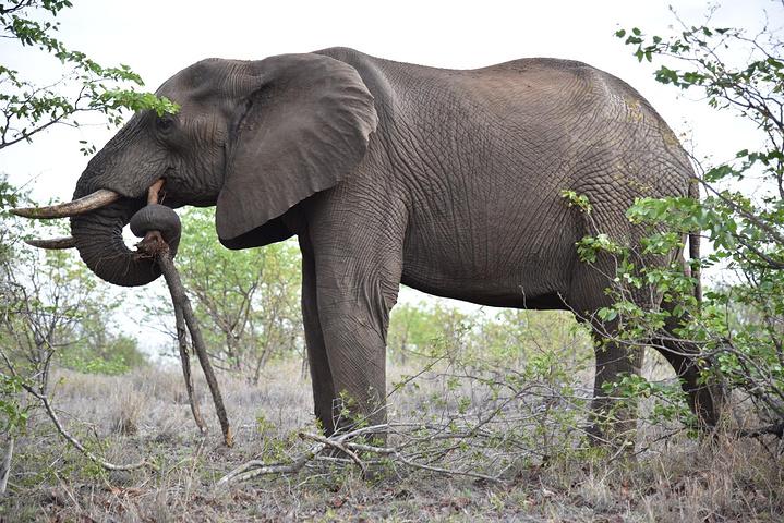 2016克鲁格国家公园是南非最大的野生动物园