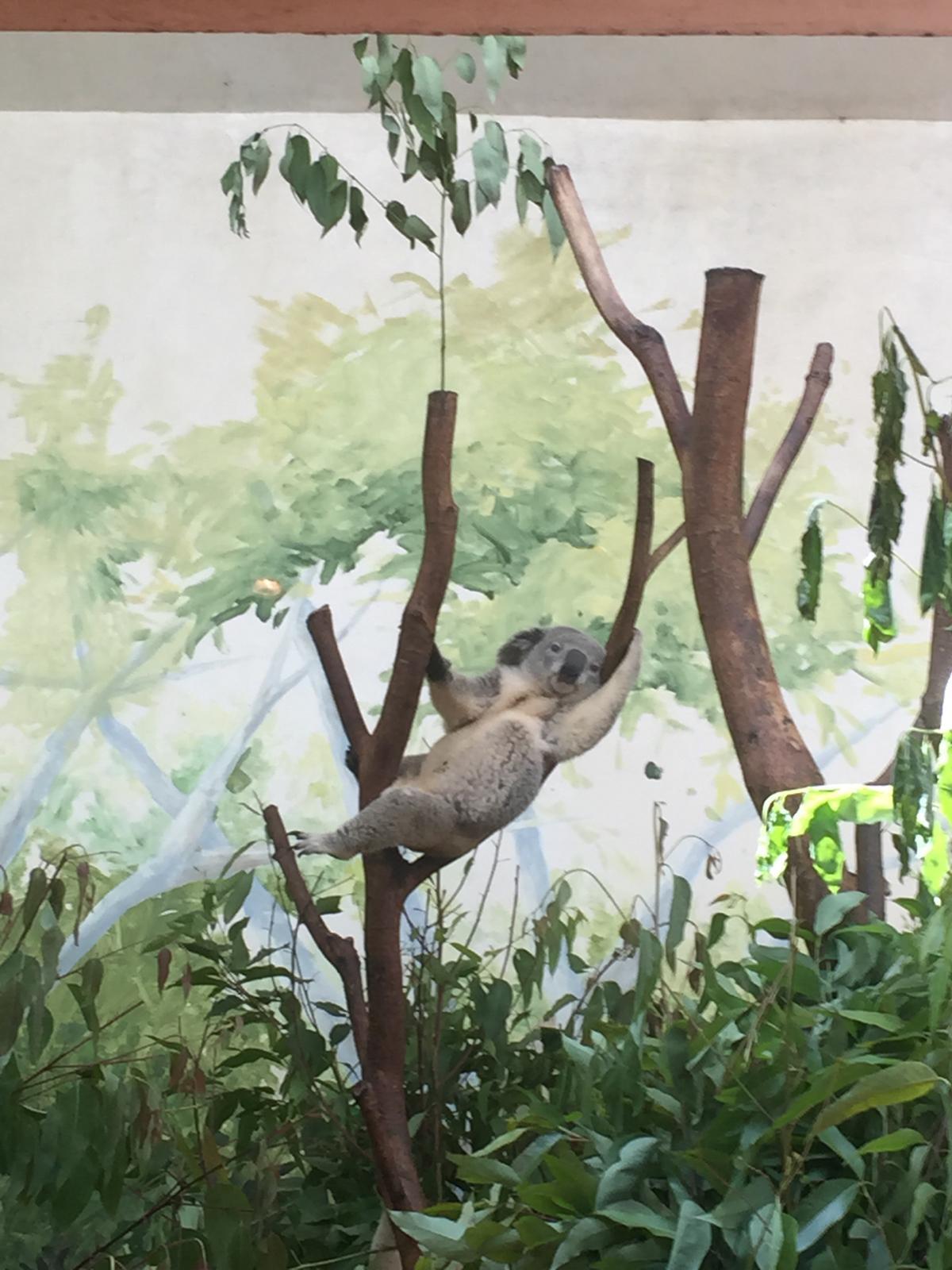 王国长隆野生动物园+珠海亲子广州吉利游_广攻略岛v亲子海洋图片