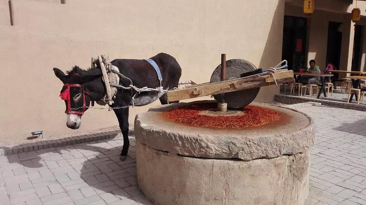 一头驴子在拉磨,碾辣椒.图片