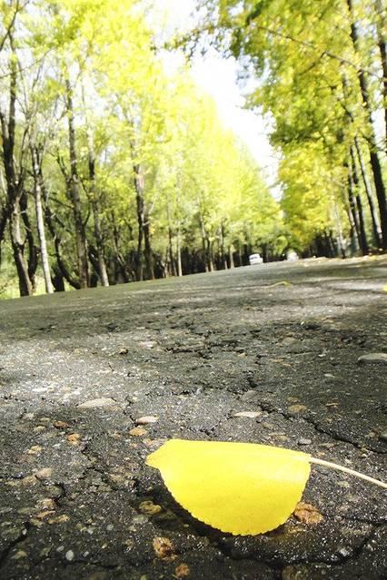 秋天树林加猴子画
