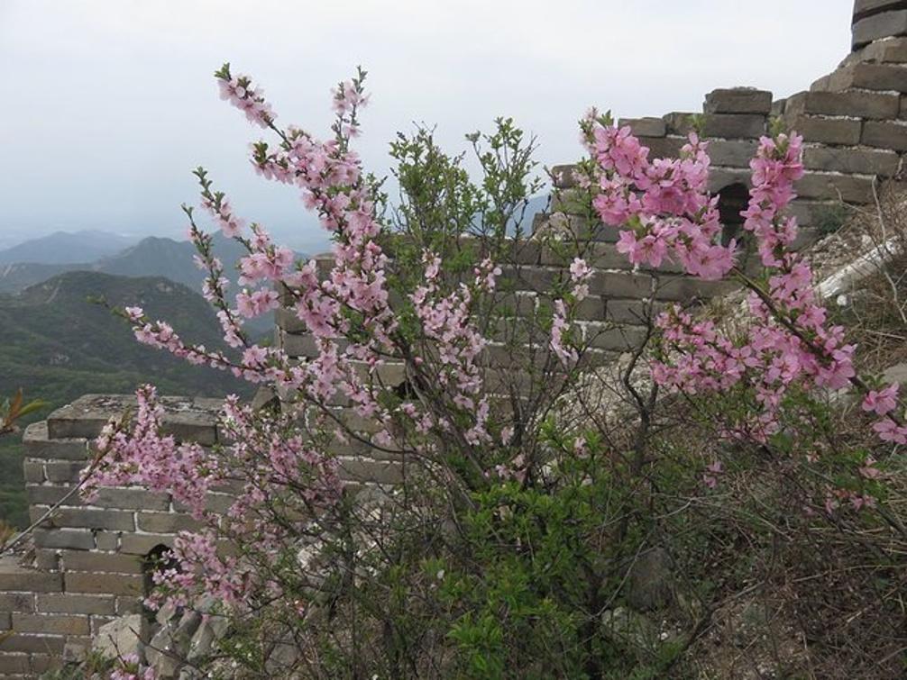满园春色关不住-陈家堡北京_长城v攻略攻略_自上海旅游一天的攻略图片