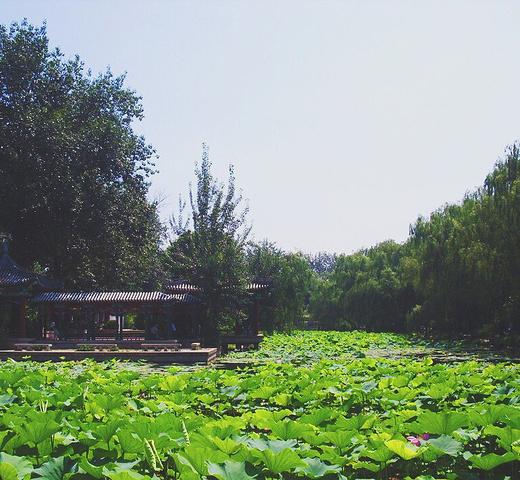 017北京的学府攻略大都成为了旅游景点,清华北蔚县重点乡自驾游柏树图片