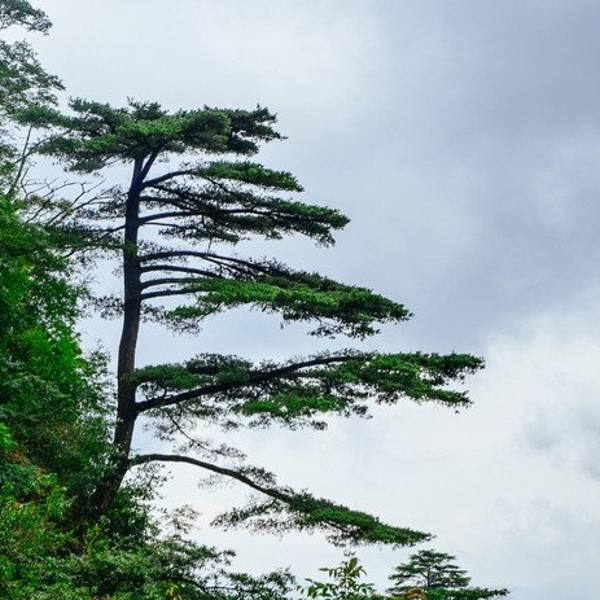 平潭国家森林公园旅游攻略南岭泉州旅游攻略一日游图片
