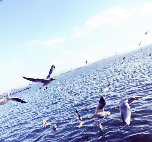 2017海埂上有很多公园_滇池美食v公园海鸥旅游资源的带来图片