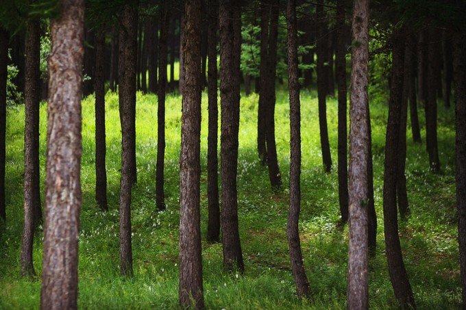 丰宁七彩森林图片
