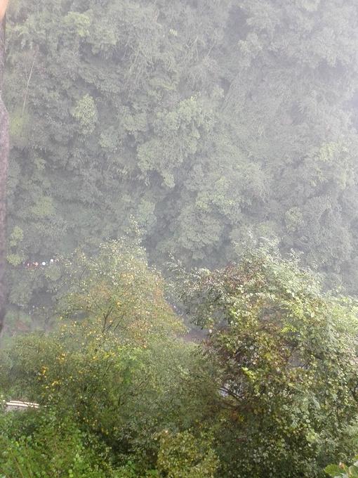 碧峰峡野生动物园图片