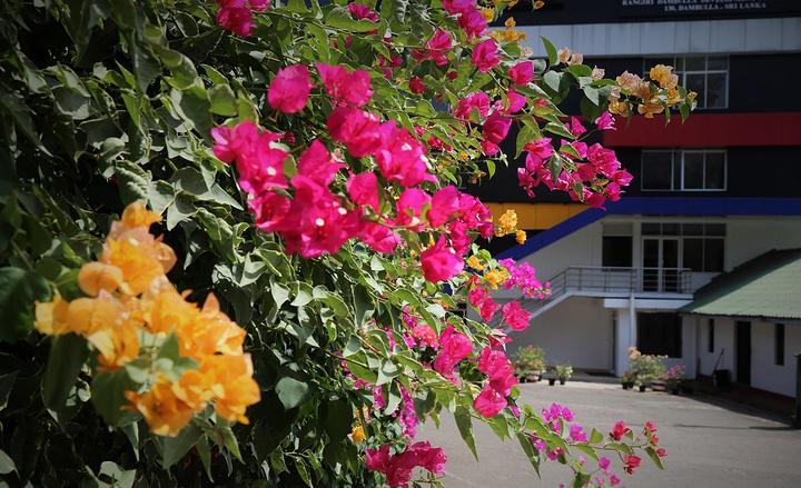 寺廟門外的花,開的很繁茂!
