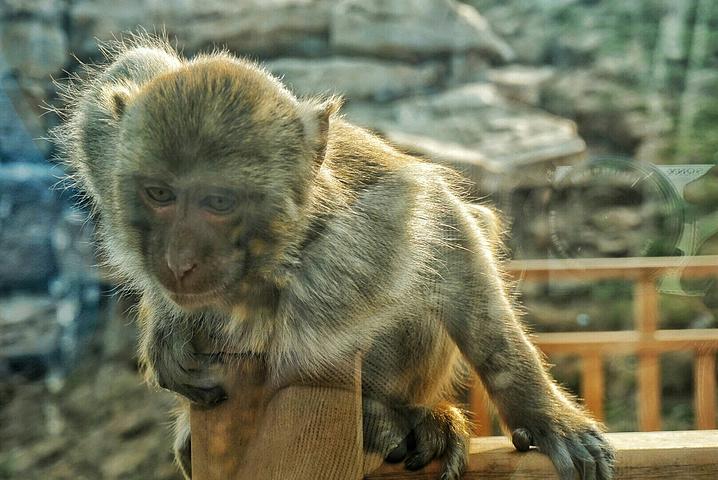 2016这些活泼可爱的小猴子是赵小猫的最爱