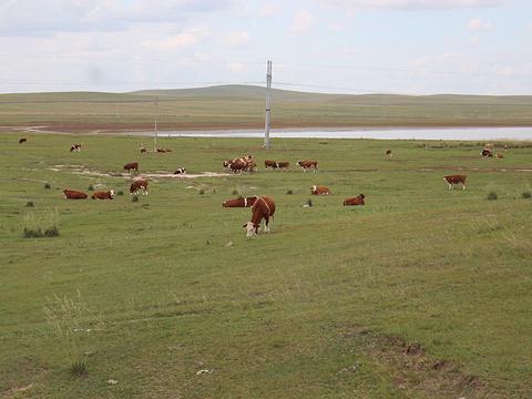 乌拉盖草原旅游景点图片