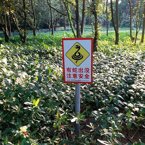 灌木丛的蛇出没警示牌