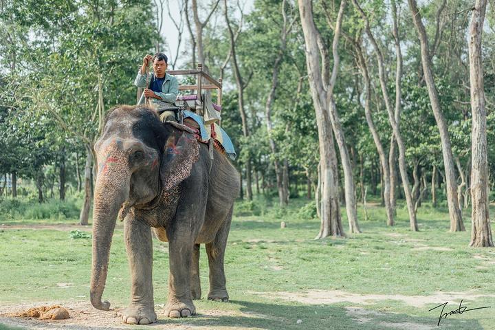 爬上台阶,骑上象背,有的大象比较活泼顽皮,有的比较悠闲.