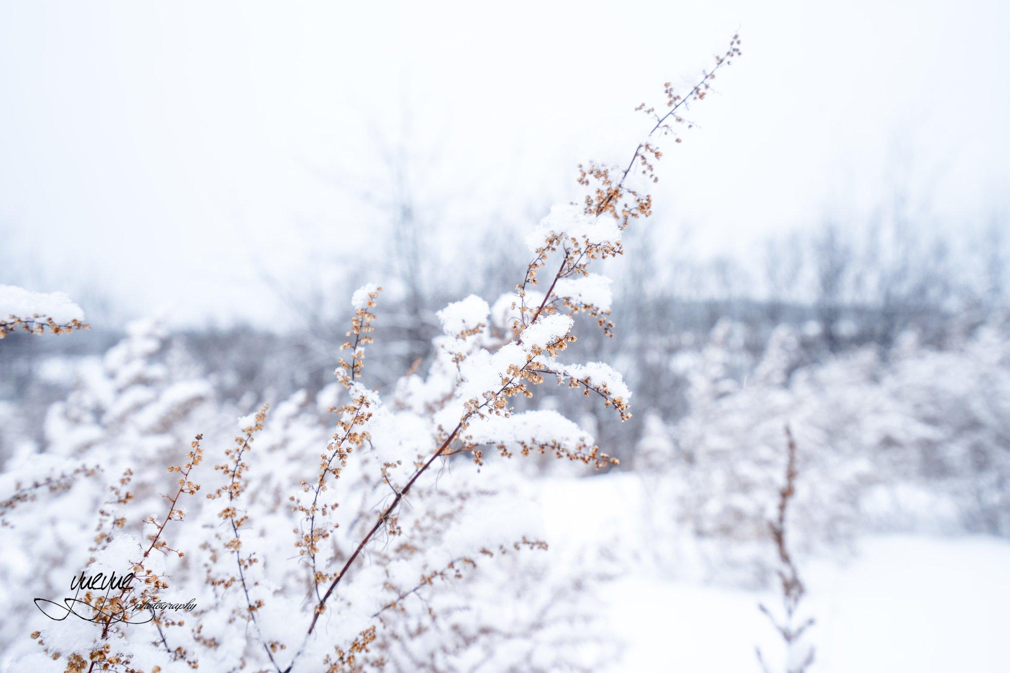 2019哈尔滨攻略馆拉普兰天山村游玩攻略,光哥北极派极地图片