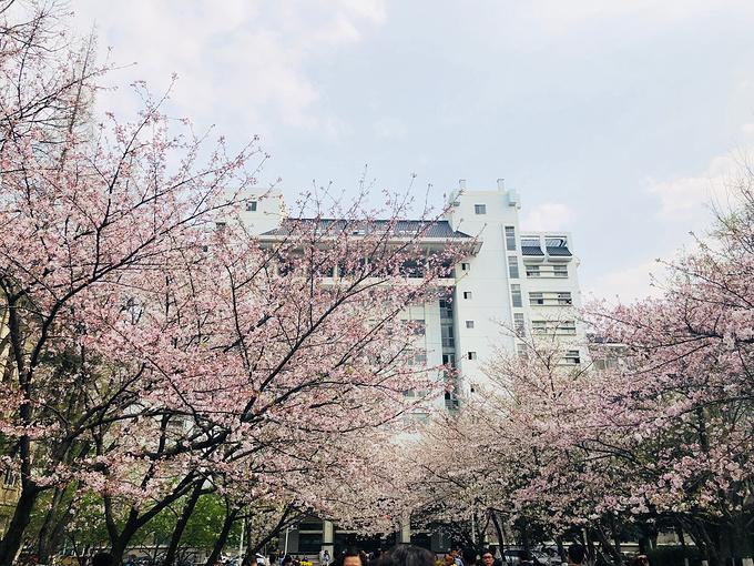 南京林业大学图片图片