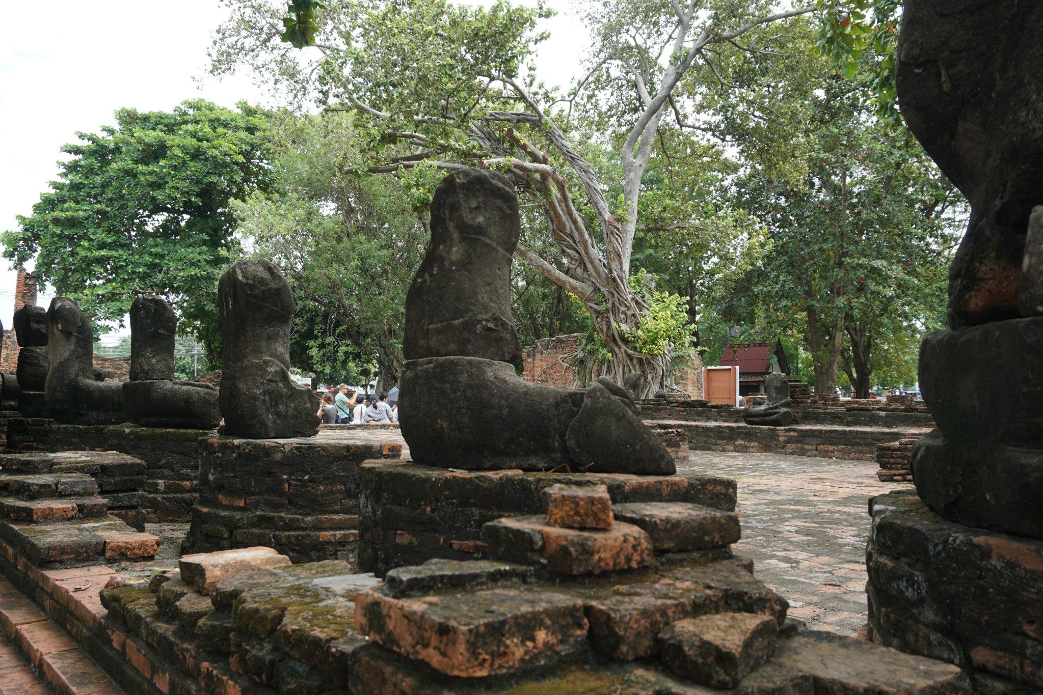 玛哈泰寺最著名的景点是入口处的树缠佛头,闭目含笑的佛头被菩提老猪肝可以吃鼻炎吗图片