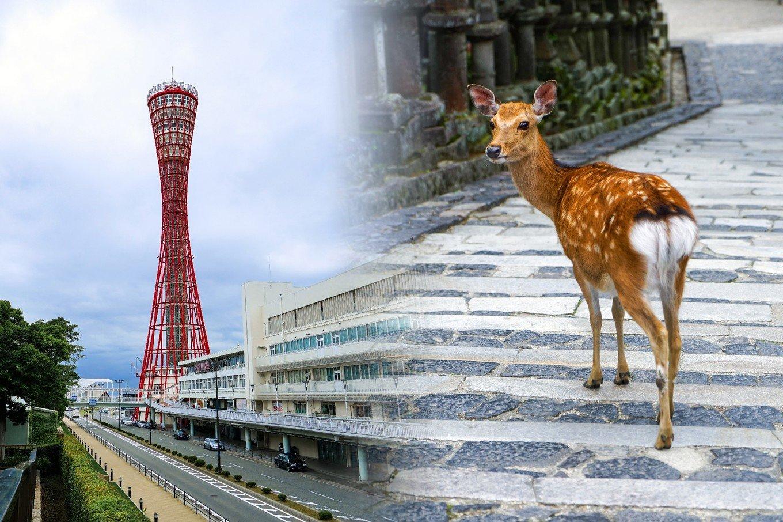 日本·关西12日深度自由行 (奈良、神户篇)(含攻略)