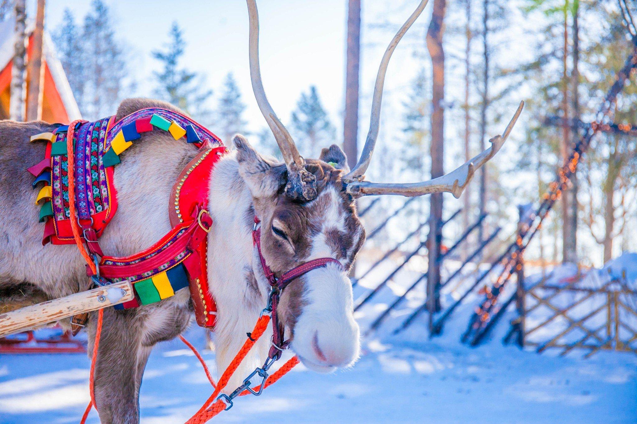 [芬兰挪威爱沙尼亚]帝王蟹 狗拉雪橇 追极光,失踪8天只为爱上你!