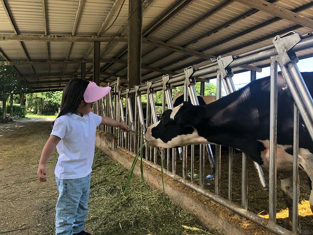 母牛产棚设计图