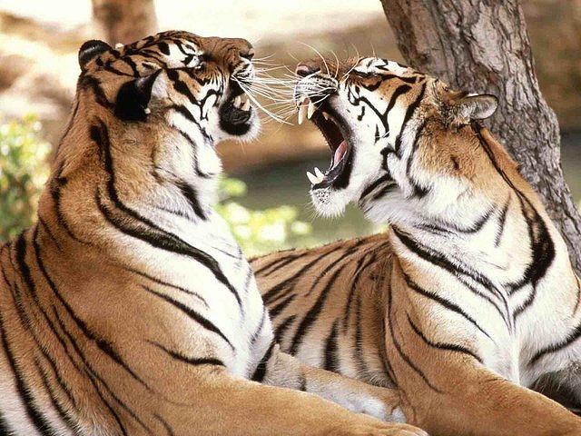 """10月-次年3月9:00-17:00(自驾区停止售票时间:15:00_北京野生动物园"""""""