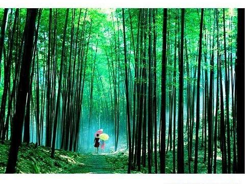 汉寿竹海国家森林公园