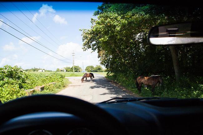 波多黎各Vieques岛4天自由行_尼斯v攻略攻略2017石乃亥住宿攻略图片