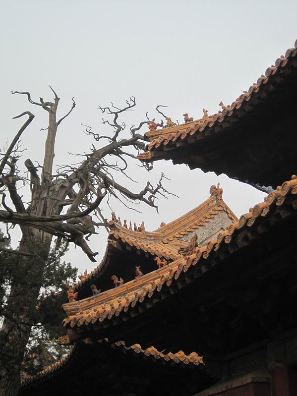 【旅行中转】500元3天穷游泰山、济宁_曲阜旅哈尔滨攻略一日游枫叶图片