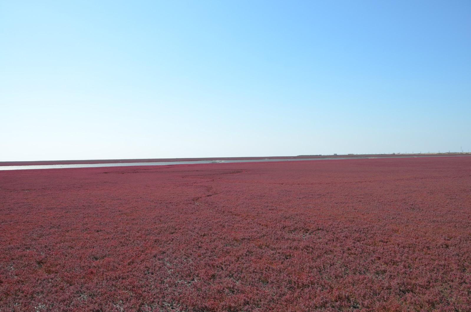 盘锦红海滩自驾一日游