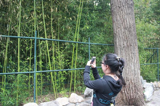 """北京动物园位于北京西城区,是中国最大的城市动物园。明代为皇家庄园,清初改为皇亲、勋臣傅恒三子福康安贝子的私人园邸,俗称三贝子花园。东部叫乐善园,西部叫可园。清光绪三十二年(1906年),可园和乐善园合并,建立农事试验场。因饲养有大量动物,故有""""万牲园""""之称。 动物园里分为很多场馆,除了大型动物都是在玻璃笼子里的,这样可以防止游客向动物投掷食物,场馆之间距离一般都较远,感觉像是动物园与公园的结合体。 园内还有个海洋馆,所以游览的时间一定要合理安排好,我们上午游览了动物园,中午匆匆吃过"""