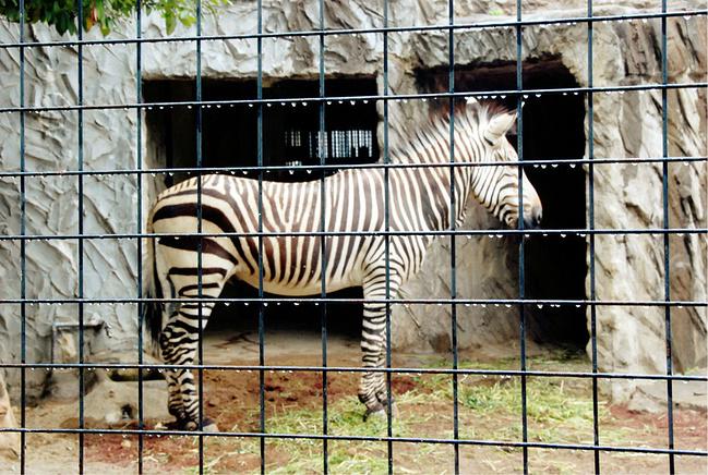 上野动物园图片