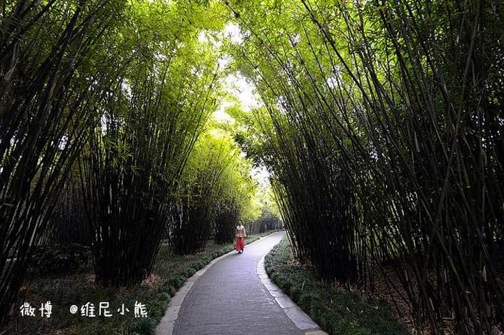竹林茂密,幽深,呈现生机勃勃的春天景象.