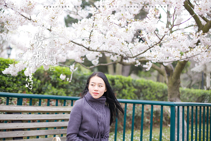 2018中山公园的樱花在国内是非常出名的,我多次来青岛