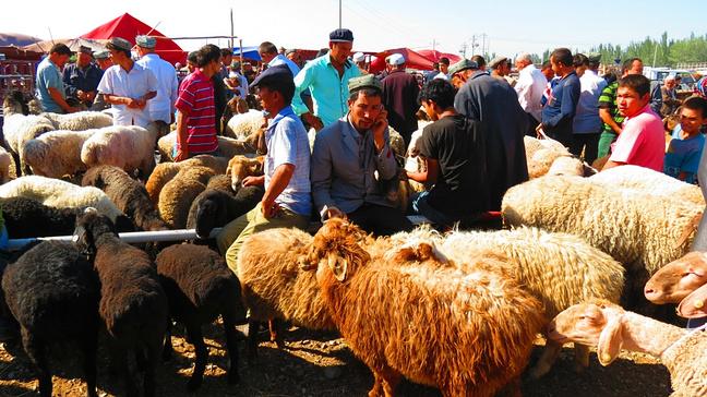 看见可爱的羊群,突然爱心泛滥