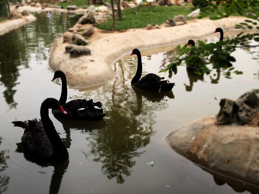 衡水湖旅游攻略_衡水湖旅游_衡水湖旅游攻略_衡水湖旅游景点