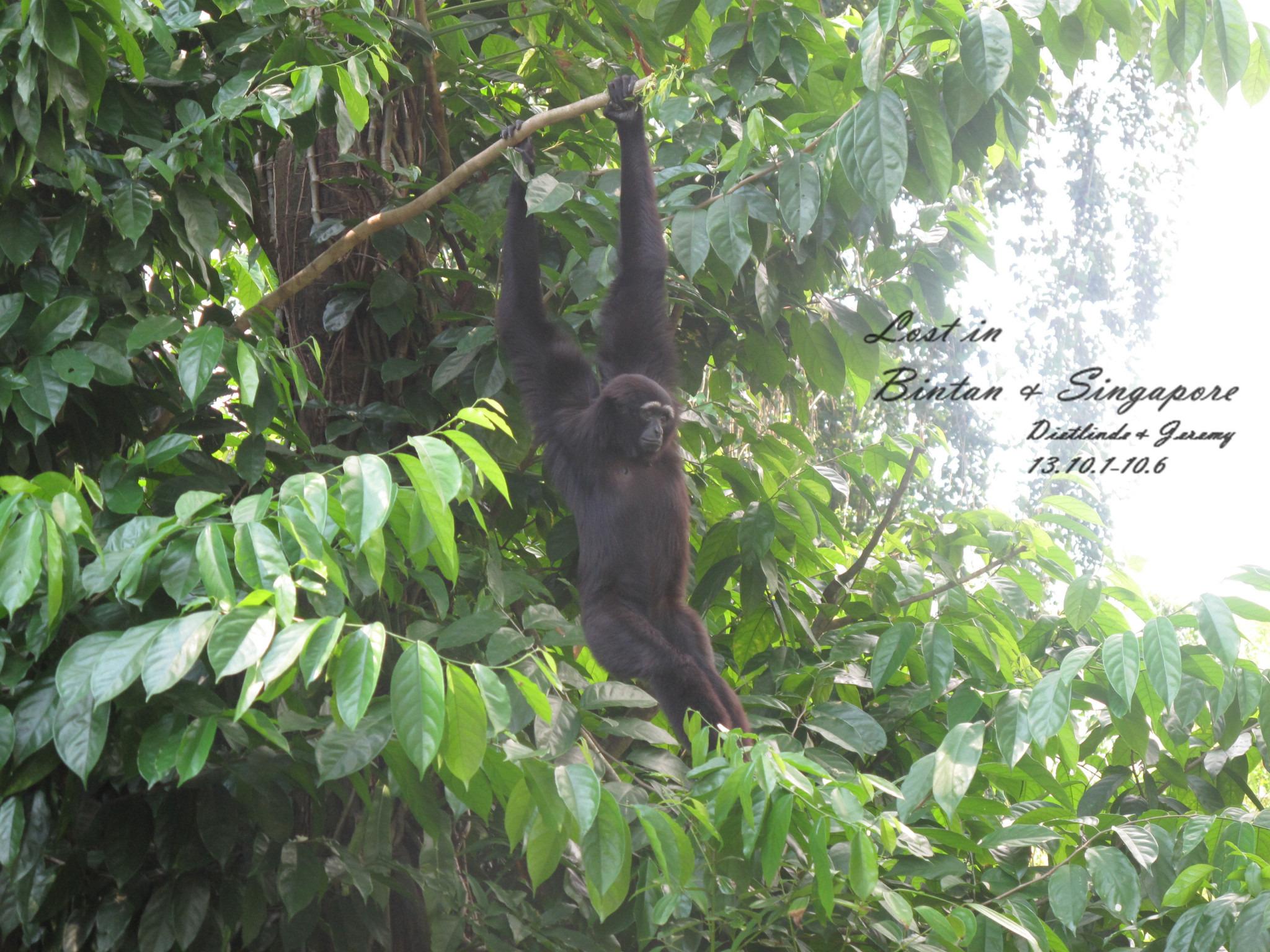 新加坡动物园旅游攻略