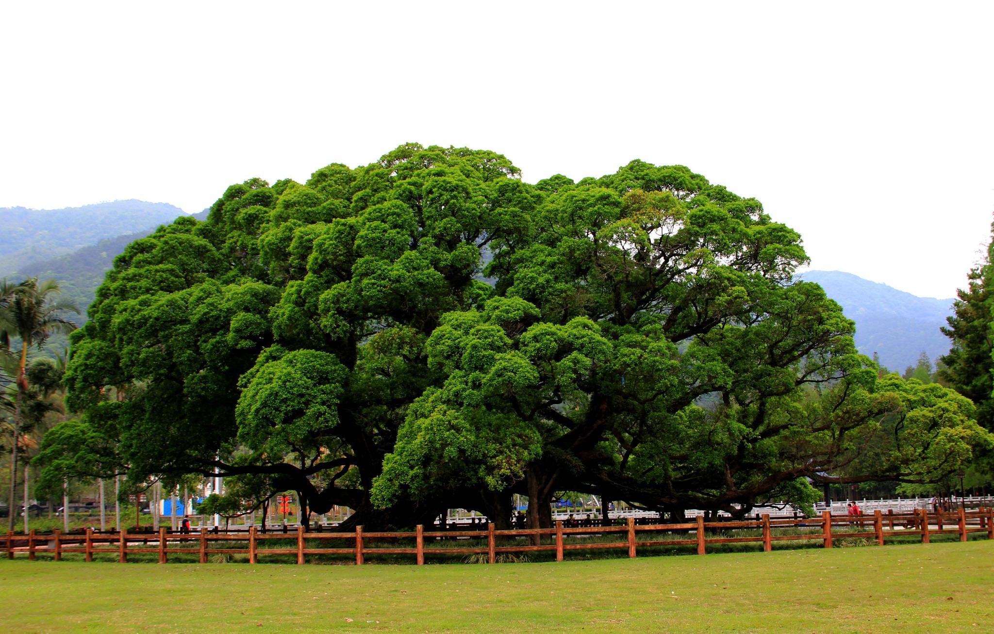 白云寺国家森林公园旅游